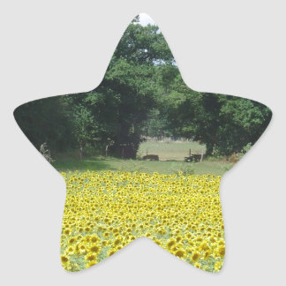 Sunflowers in Limousin Star Sticker