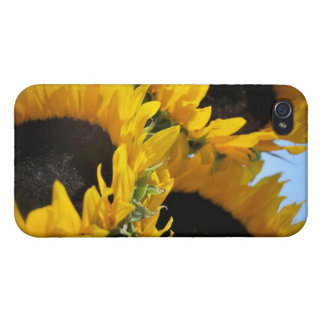 Sunflowers iPhone 4 Covers