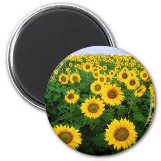 Sunflowers 6 Cm Round Magnet