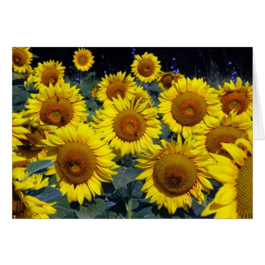 Sunflowers...Nature's Smiling Faces Card