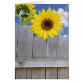 Sunflowers over fence greeting card