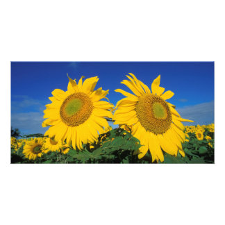 Sunflowers Personalized Photo Card