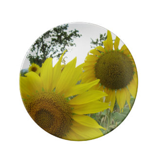 Sunflowers Photo  Decorative Porcelain Plate