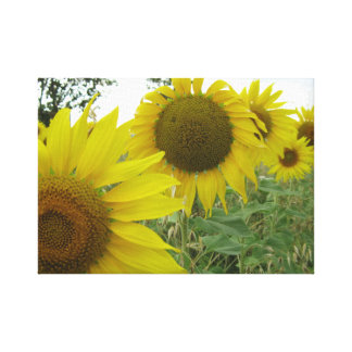 Sunflowers Photo Single Canvas Print