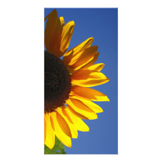 Sunflowers Picture Card