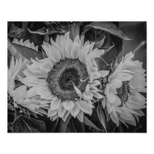 Sunflowers Poster/Print Poster