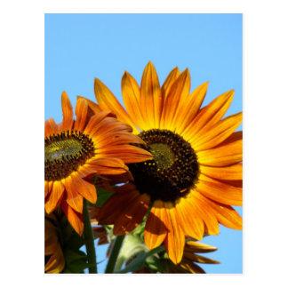 SUNFLOWERS SUN FLOWERS POST CARDS POST CARD