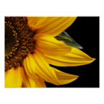 Sunflowers - Sunflower Customised Template Blank Poster