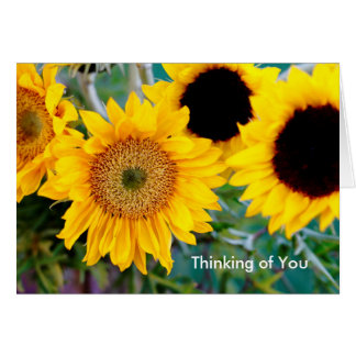 Sunflowers - Thinking of You Note Card