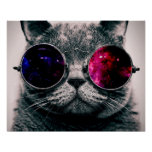sunglasses cat