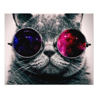 sunglasses cat 11.5 cm x 14 cm flyer