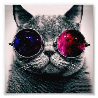 sunglasses cat photo print