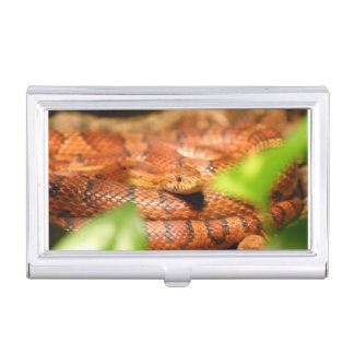 sunkissed corn snake.png business card case