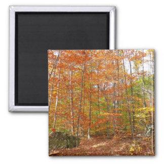 Sunlight Dappled Fall Trail Magnet