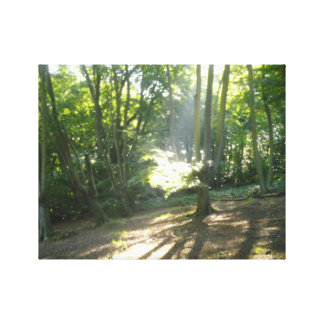 Sunlight in the woods canvas print