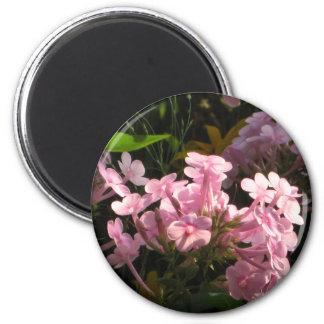 Sunlight on Pink Flowers 6 Cm Round Magnet