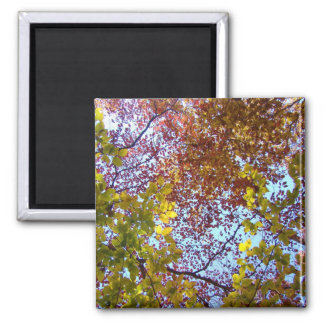 Sunlight on the leaves square magnet