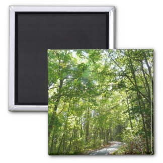 Sunlight on Wooded Path Columbia Maryland Photo Square Magnet