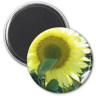 Sunlight Sunflower 6 Cm Round Magnet