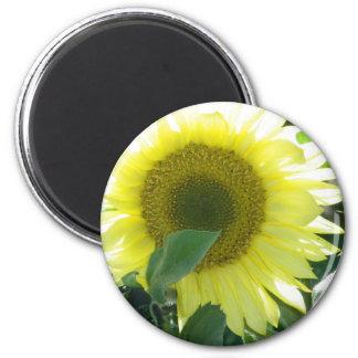 Sunlight Sunflower Refrigerator Magnet