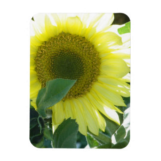 Sunlight Sunflower Rectangle Magnets