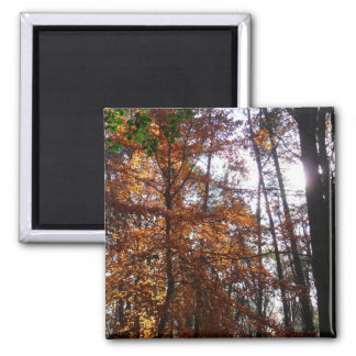 Sunlight Through Fall Tree Magnet