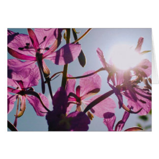 Sunlight Through Flowers Greeting Card