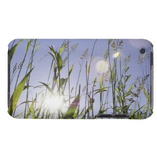 Sunlight through grass barely there iPod cases