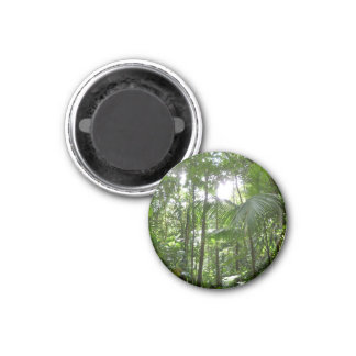 Sunlight Through Rain Forest Canopy Magnet