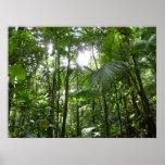 Sunlight Through Rainforest Canopy Print Poster