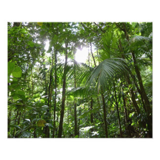 Sunlight Through Rainforest Canopy Tropical Green Photographic Print
