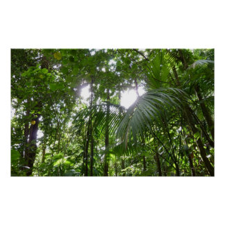 Sunlight Through Rainforest Canopy Tropical Green Poster