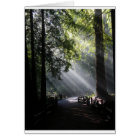 Sunlight Through The Redwood Trees Card