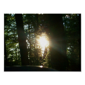 Sunlight Through The Trees Poster