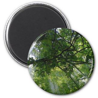 Sunlight Through Trees Refrigerator Magnets