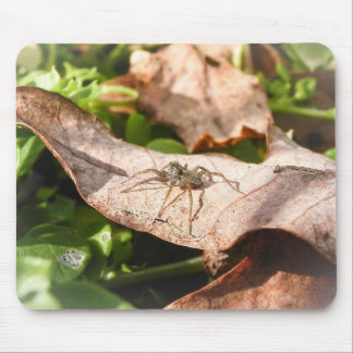 Sunlit Baby Spider Mouse Pad