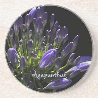 Sunlit Blooming Purple Agapanthus, African Lily Coaster