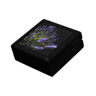 Sunlit Blooming Purple Agapanthus, African Lily Gift Box