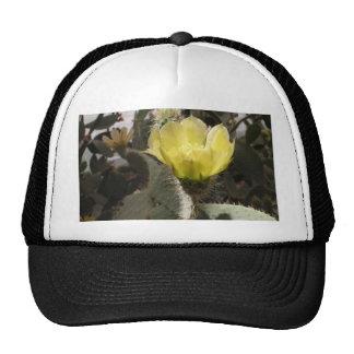Sunlit Cactus Flower Mesh Hats