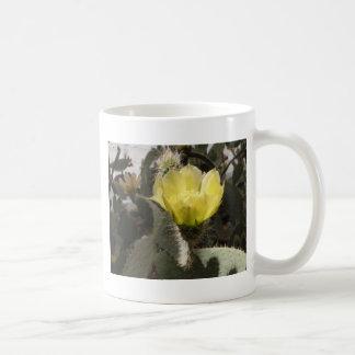 Sunlit Cactus Flower Mugs