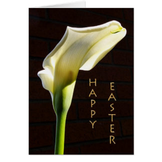 sunlit calla lily easter card