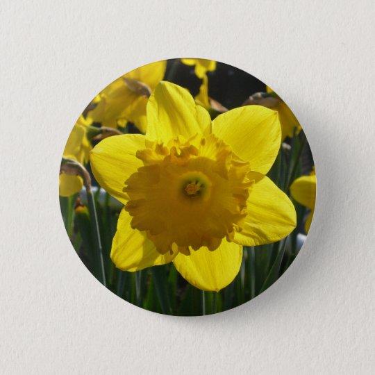 Sunlit Daffodil 6 Cm Round Badge