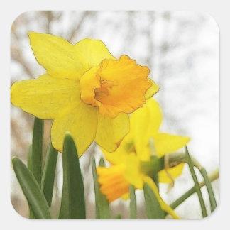 Sunlit Daffodils Square Sticker