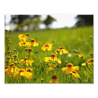 Sunlit flowers in a field photo print