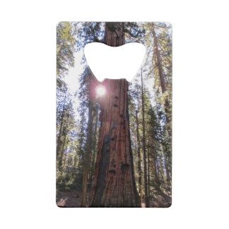 Sunlit Forest Bottle Opener