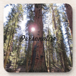 Sunlit Forest Coasters