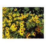 Sunlit Meadow Postcard