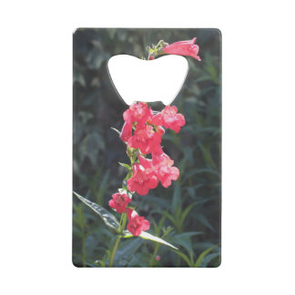Sunlit Pink Penstemon Flower Bottle Opener