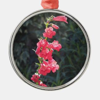 Sunlit Pink Penstemon Flower Christmas Ornament