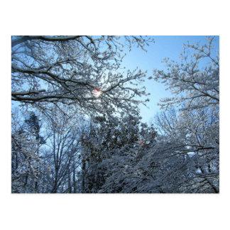 Sunlit Snowy Trees Starburst Blue Sky Winter Post Card